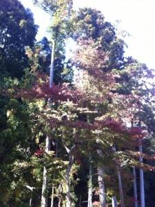 猿投神社境内の紅葉